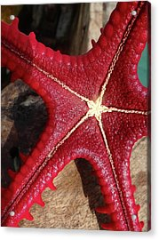 Red Starfish On A Wooden Dhow 3 Close Up Acrylic Print