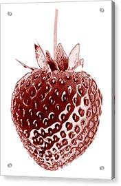 Red Strawberry Botanical Illustration Acrylic Print by Frank Tschakert