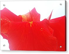 Red Acrylic Print by Susette Lacsina