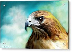Red Tail Hawk  Acrylic Print by Crispin  Delgado