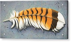 Red Tail Hawk Feather Acrylic Print