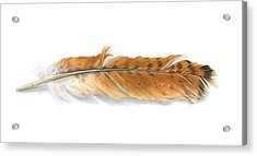 Red-tailed Hawk Feather Acrylic Print by Logan Parsons