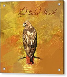Acrylic Print featuring the photograph Red-tailed Hawk Watercolor Photo by Heidi Hermes