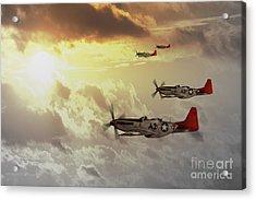 Red Tails Acrylic Print by J Biggadike
