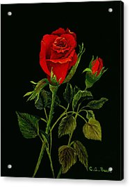 Red Tango Rose Bud Acrylic Print