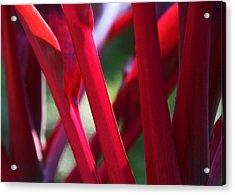 Red Ti  Acrylic Print