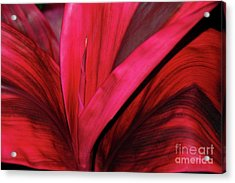Acrylic Print featuring the photograph Red Ti Leaf Plant - Hawaii by D Davila