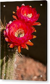 Red Tops Acrylic Print