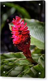 Red Torch Acrylic Print