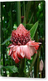 Red Torch Ginger Acrylic Print by Tropical Ties Dominica