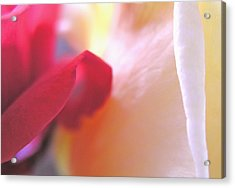 Red Touches White Acrylic Print by Don Ziegler