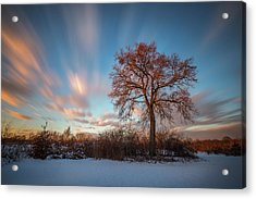 Acrylic Print featuring the photograph Red Tree by Davorin Mance