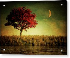 Red Tree With Moonrise Acrylic Print
