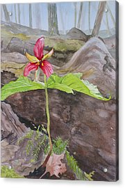 Red Trillium In The Spring  Acrylic Print by Debbie Homewood