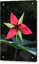 Red Trillium Wildflower Acrylic Print by John Burk