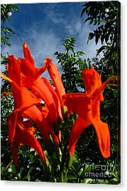 Red Trumpeter Acrylic Print by Greg Patzer
