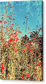 Red Trumpets Playing Acrylic Print