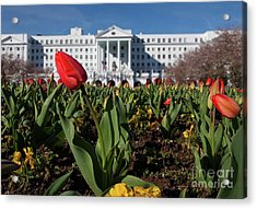Red Tulip At The Greenbrier Acrylic Print
