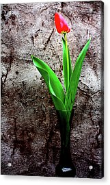 Acrylic Print featuring the photograph Red Tulip by Gray  Artus