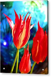 Red Tulip With Blue Ball Acrylic Print