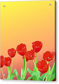 Red Tulips Acrylic Print by Kristin Elmquist