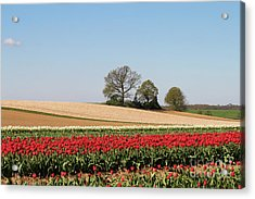 Red Tulips Landscape Acrylic Print