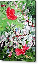 Red Variegated Hibiscus Acrylic Print