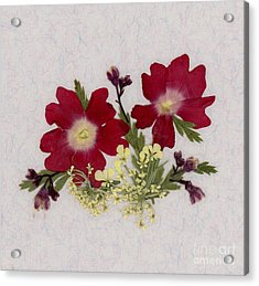 Red Verbena Pressed Flower Arrangement Acrylic Print