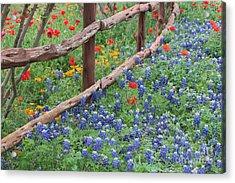 Red Versus Blue Acrylic Print