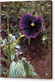 Red Violet Dew Acrylic Print