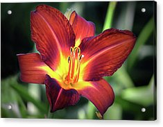 Acrylic Print featuring the photograph Red Volunteer. by Terence Davis