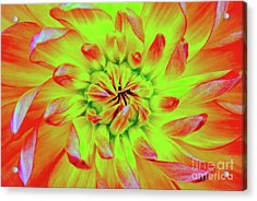 Red Whirl Acrylic Print
