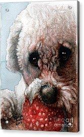 Red, White And Bella Acrylic Print by Karen Wheeler