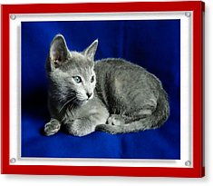 Red, White, Russian Blue Acrylic Print