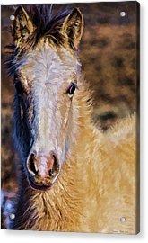 Red Willow Pony Acrylic Print
