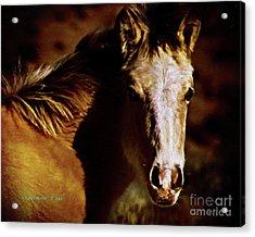 Red Willow Pony Lx Acrylic Print