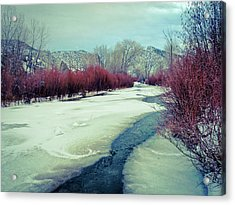 Acrylic Print featuring the photograph Red Willows On The Embudo by Atom Crawford