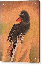 Red-winged Blackbird 3 Acrylic Print