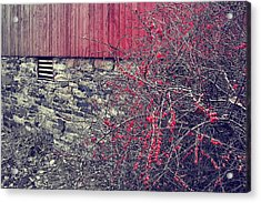 Red Winter Acrylic Print by JAMART Photography