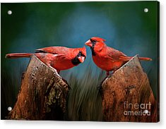 Redbird Sentinels Acrylic Print by Bonnie Barry