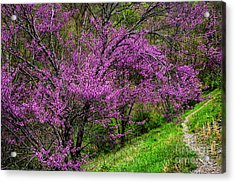 Acrylic Print featuring the photograph Redbud And Path by Thomas R Fletcher