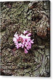 Redbud Flowers 1  Acrylic Print by Sarah Loft