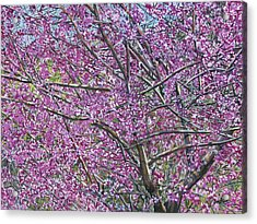 Acrylic Print featuring the painting Redbud Tree by Nadi Spencer