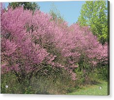 Acrylic Print featuring the photograph Redbuds In West Virginia by Beth Akerman
