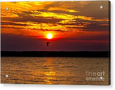 Redeye Flight Acrylic Print