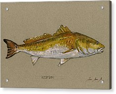 Redfish Painting  Acrylic Print by Juan  Bosco