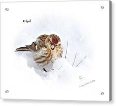 Redpoll Acrylic Print