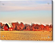 Reds And Oranges Acrylic Print