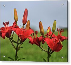Acrylic Print featuring the photograph Reds by Robert Pilkington