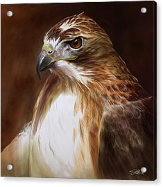 Redtailed Hawk Portrait Acrylic Print by Steve Goad